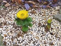 新年・・・ - 【出逢いの花々】