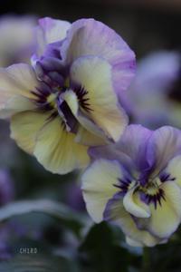 好きと感じる時 - CHIROのお庭しごと