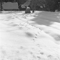 雪景色 monochrome #9. - SunsetLine