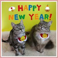 Happy new year 2017☆ - 愛しき猫にゃん♪