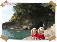 2016年12月24日 伊豆 浮島海岸(動物・ペット部門) - 週末は、愛犬モモと永吉とお出かけ!Kimi's Eye