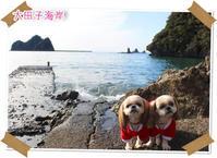 2016年12月24日 伊豆 大田子海岸(動物・ペット部門) - 週末は、愛犬モモと永吉とお出かけ!Kimi's Eye