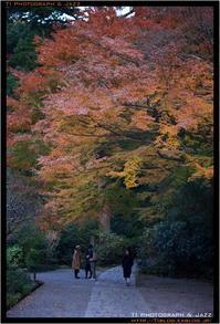鎌倉散歩 Part 1 - TI Photograph & Jazz