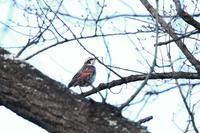野鳥の撮影(1月3日) - 何でも写真館