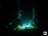 毎晩出撃〜!!(≧∀≦) - Esperance Diving