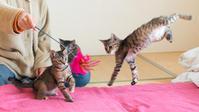 猫じゃらし師とサビニャンズ - 猫と夕焼け