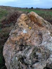 石も生きている - イギリス ウェールズの自然なくらし