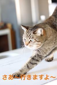 にゃんこ劇場「伸びま〜す」 - ゆきなそう  猫とガーデニングの日記