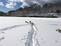 年越し雪遊び - アルフォンス日記