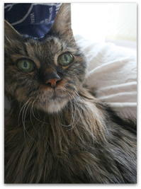 22才ご長寿猫 はんぞう との暮らし 「23回目のお正月&保護子猫たちの正月」 - たびねこ
