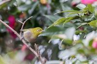 昭和記念公園で出逢った野鳥 - あだっちゃんの花鳥風月