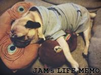 お正月の過ごし方 - LIFE MEMO
