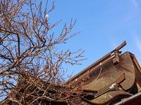 飛梅と梅が枝餅 - あそびをせんとや ~あそびっこ~