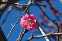 小畔川便り(正月三が日の蝶たち:2017/1/1.3) - 小畔川日記