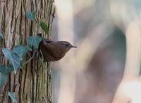林の中で、、 - ぶらり探鳥