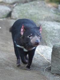 1月5日(木) 初見 - ほのぼの動物写真日記
