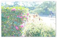 栗林公園 その② - Yuruyuru Photograph