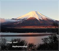 わんこと一緒に富士山へお出かけ♪ - ☆Happy time☆