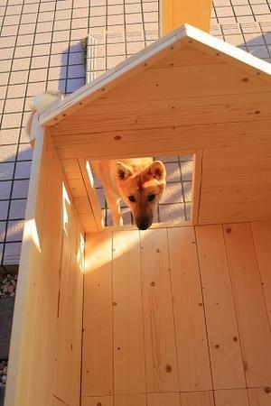 新居。 - 結局ただの犬バカです。