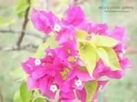 osanpo - eico's photo gallery