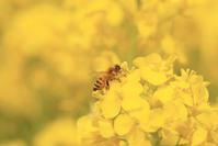 [2/18]アーユルヴェーダで 不調のない春を過ごす  in 表参道 Tokyo - MOKSHA-ayurvedic life