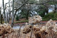 新春の候 - ココロのままにゆるりぱちり
