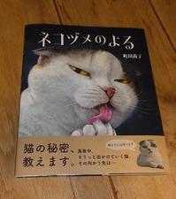 すずとネコヅメ - アスタリスク日記