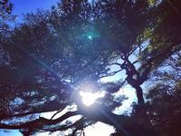 謹賀新年@2017 - 横浜開港法律事務所のブログ