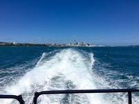 我が家の新年、海と丘/ Our New Year, On the Sea and Land - アメリカからニュージーランドへ