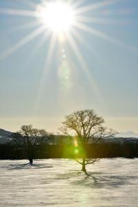 冬の十勝④ - Photo Of 北海道大陸