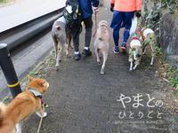 冬休みのアルバム 「初散歩」 - yamatoのひとりごと