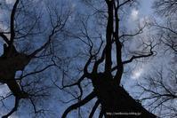 冬の木々 - Noriko's Photo  -light & shadow-