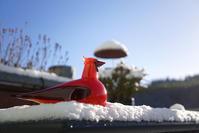 iittala Birds by Toikka -Red Cardinal - buckの気ままなblog。