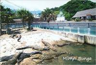 別府 鉄輪温泉 鬼山地獄のポストカード&風景印 - Mimpi Bunga の旅の思い出