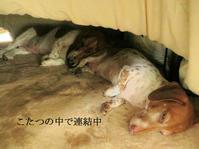 サニーとサラの日常  犬と一緒にお参り出来る神社 - 山麓風景と編み物