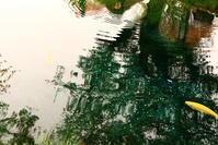 富士山旅行⑦~忍野八海  (旅行・お出かけ部門) - 司法書士 行政書士 柿本大治の青空さんぽ