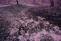 第12回美しい風景写真100人展[仙台展]2月23日より開催! - 風景写真出版からのおしらせ