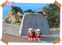 2016年12月24日 伊豆 黄金崎(動物・ペット部門) - 週末は、愛犬モモと永吉とお出かけ!Kimi's Eye