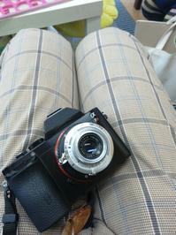 ★TOMIOKA S-LAUSAR 4.5cm f3.5〔信濃光機 pigeon35(1952) 改造レンズ〕テスト - 一写入魂
