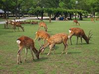 奈良公園【rusie さん】 - あしずり城 本丸
