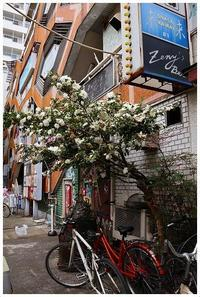 白椿の傘 -  one's  heart