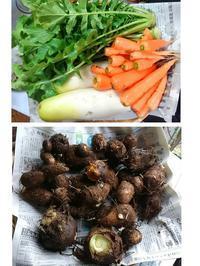 野菜の収穫と菜園の片づけ - 芽々のちゃぶ台