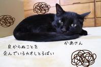 猫と石けん スリー - ちょこってぃ