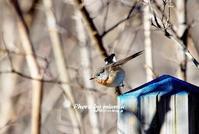 稀な野鳥 ニシオジロビタキ③ - azure 自然散策 ~自然・季節・野鳥~