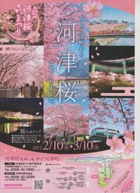 河津桜まつり 2月10日から - 白壁荘だより  天城百話