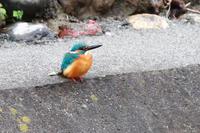 唐沢川の野鳥 - 何でも写真館