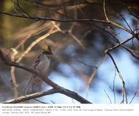 真岡市・井頭公園 2016.1.7(3) - 鳥撮り遊び