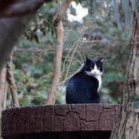 鳥と猫の公園 - 休日はタンデムツーリング
