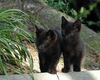 今まで出会った猫たち7 - 自然の写真帖