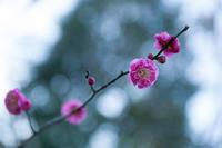 森にも梅が咲く - 彩りの軌跡